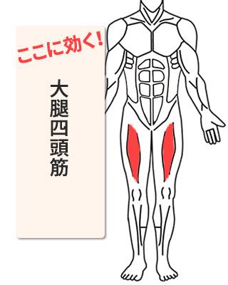 効く部位:大腿四頭筋
